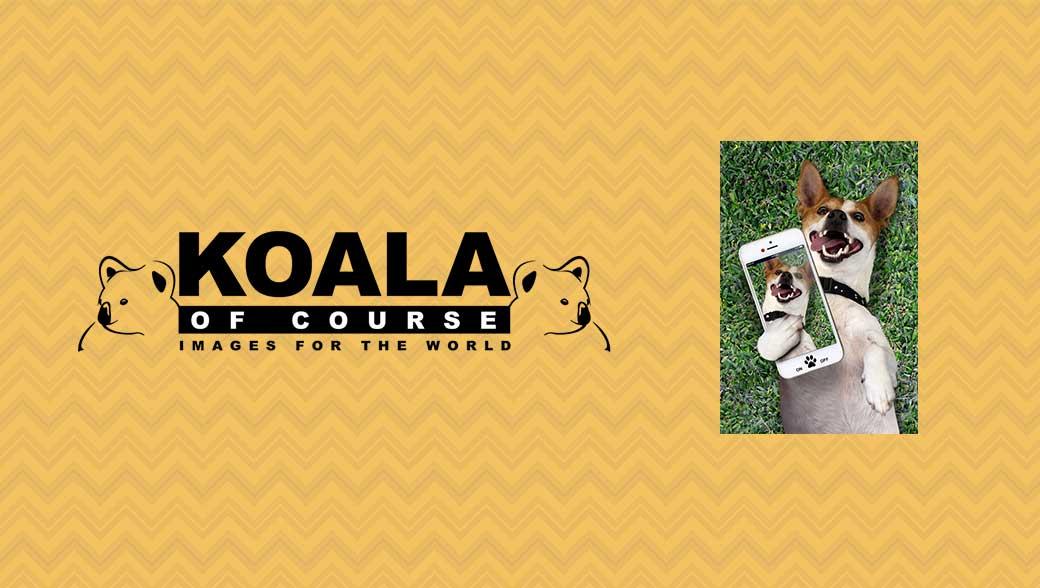 Koala of Course Gift Bag Range